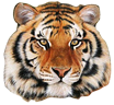 Tiger Family Products Page